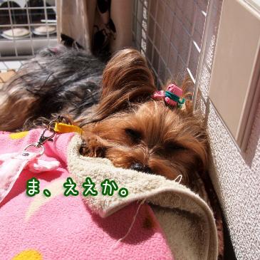 5_20110215193740.jpg