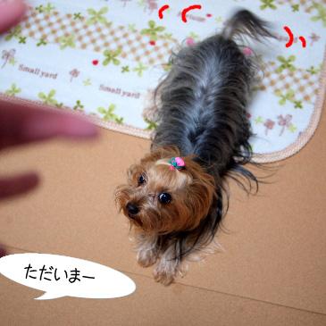 5_20110220191023.jpg