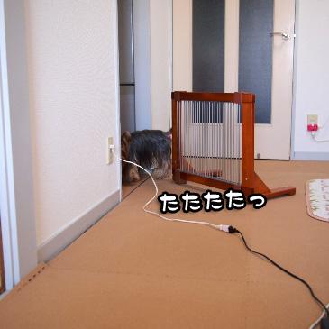5_20110224185007.jpg