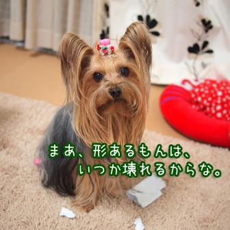 5_20110305095436.jpg