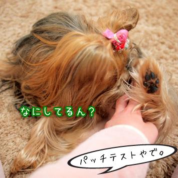 5_20110309181742.jpg