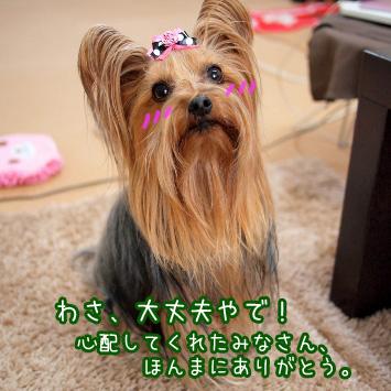 5_20110315093205.jpg