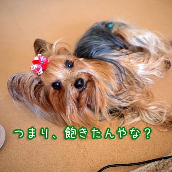 5_20110319130557.jpg
