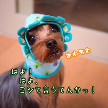 6_20110112193831.jpg