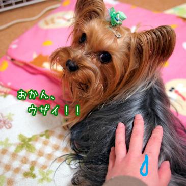 6_20110113192704.jpg