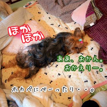 6_20110117155757.jpg