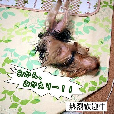 6_20110124192441.jpg