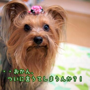 6_20110127200329.jpg