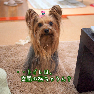 6_20110210161709.jpg