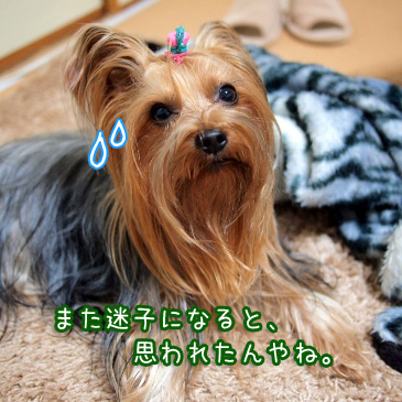 6_20110220191022.jpg