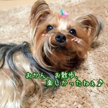 6_20110226182235.jpg
