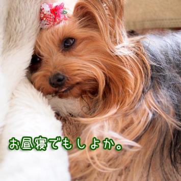 6_20110316122152.jpg