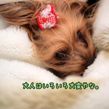 6_20110318183518.jpg