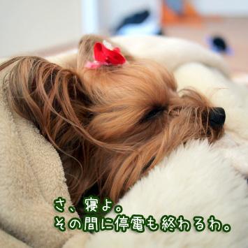 6_20110329181152.jpg