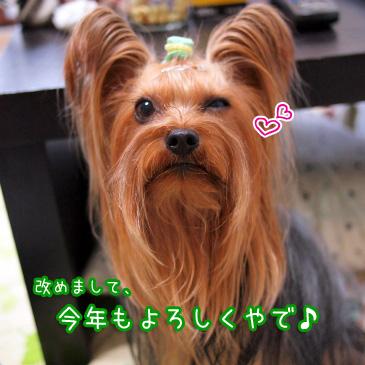 7_20110110172243.jpg