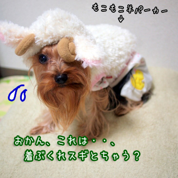 7_20110123150849.jpg