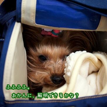 7_20110129192610.jpg