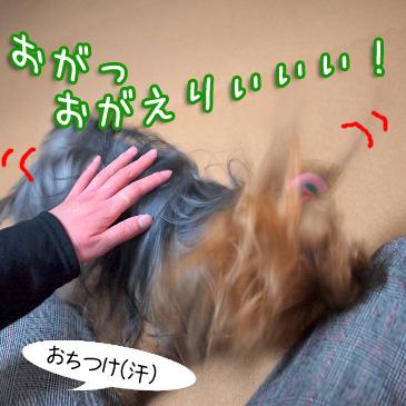 7_20110220191034.jpg