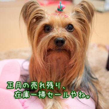 7_20110222091830.jpg