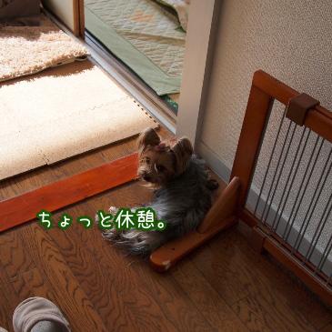 8_20110211194650.jpg