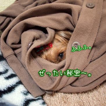 8_20110224185023.jpg