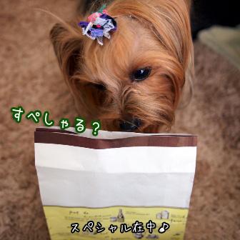 8_20110302150926.jpg