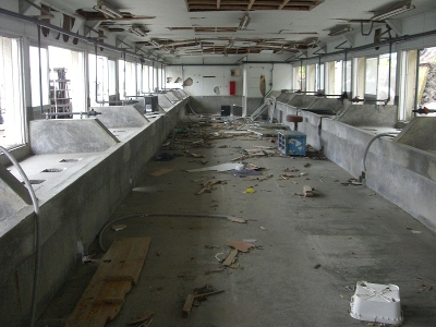 狐崎浜 牡蠣剥き工場