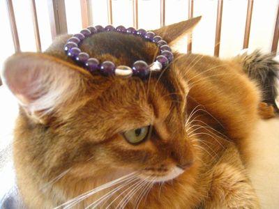 数珠の王冠