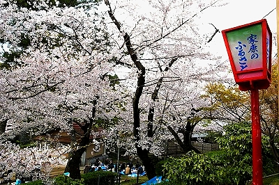 岡崎公園01027