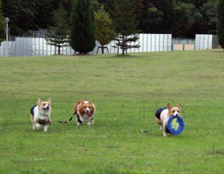 みんなで楽しく走るよ?!