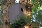 奥の杉の木巣箱