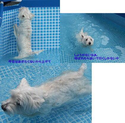 joy-pool.jpg