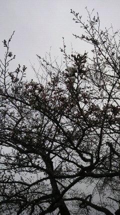 上野尻in桜