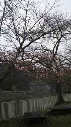 上野尻in桜2