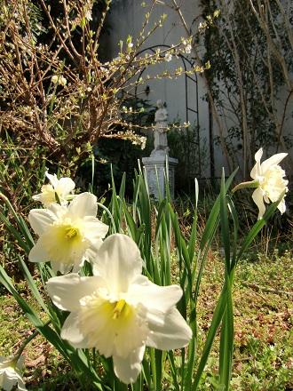 daffodiltoday