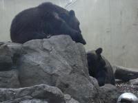 081103_上野動物園 005