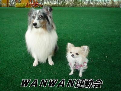 4.WANWAN運動会