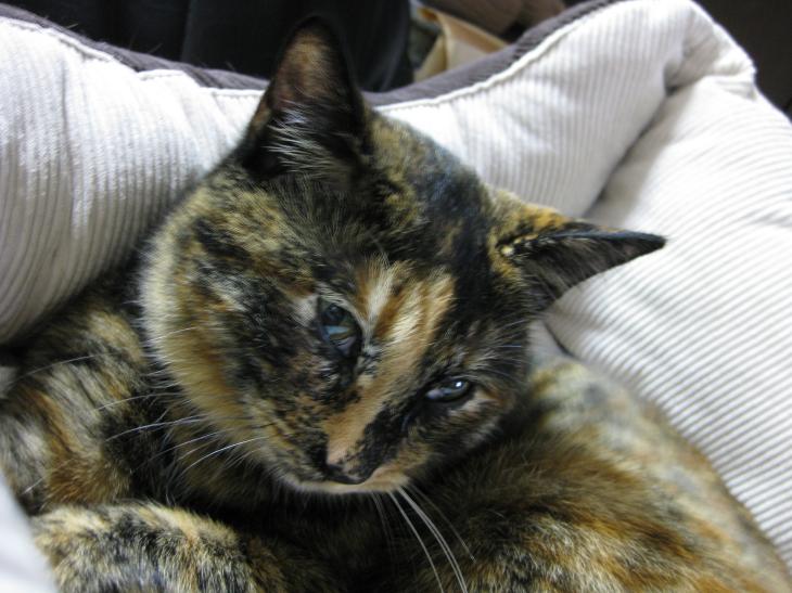 白血病 治る: やっぱり猫が好き♪ ワクチン接種と耳ダニ駆除
