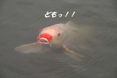1_3623.jpg