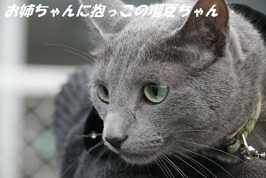 1_3893.jpg