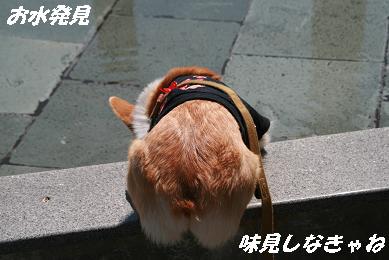 1_4655.jpg