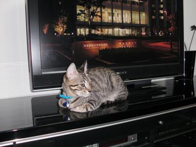 テレビの前1