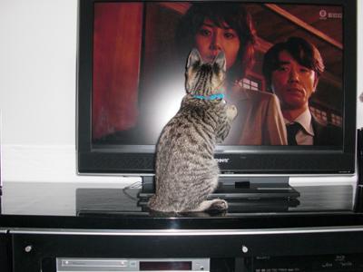 テレビが好き