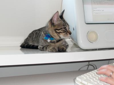 パソコンの横のレイ