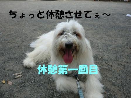 CIMG0476.jpg