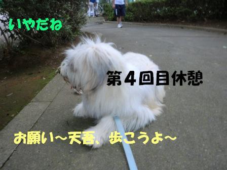 CIMG0479.jpg