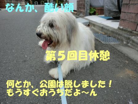 CIMG0480.jpg