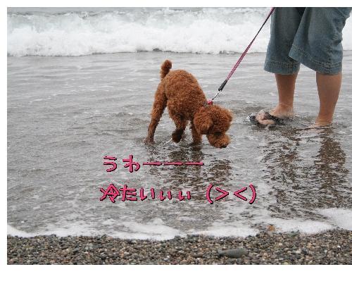 わさび海3