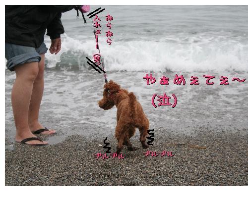 わさび海5
