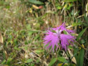 2008.11.1~3 比婆山 (1) 030